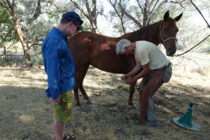 Dan shoeing horses